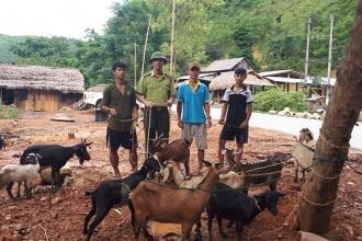 BQL Dự án rừng đặc dụng Phong Nha – Kẻ Bàng trao Dê giống hỗ trợ sinh kế cho các hộ dân các xã vùng đệm VQG